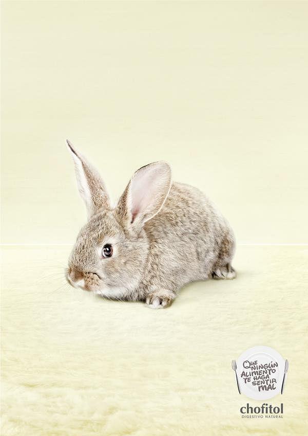 Digestivo Natural, Bunny
