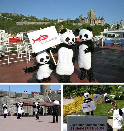 Operation Panda - Advertising