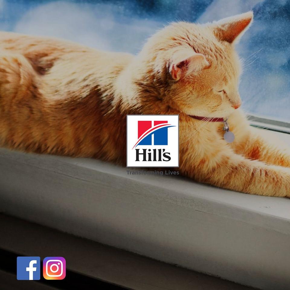Hill's Pet Belgium
