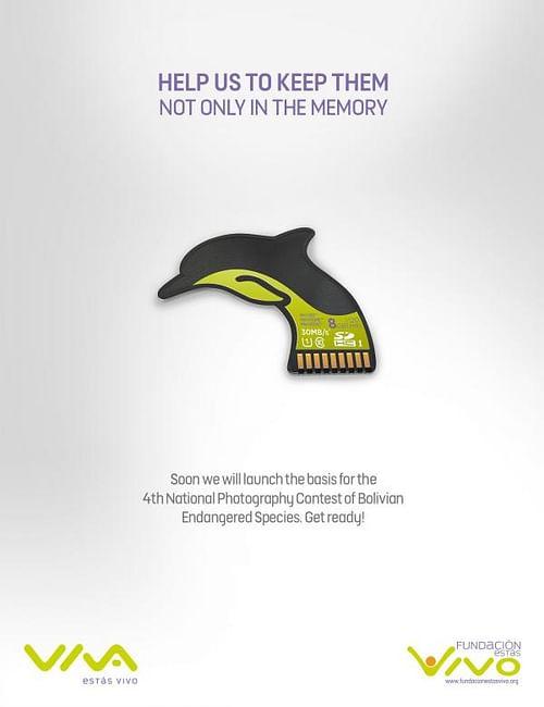 Dolphin - Website Creation