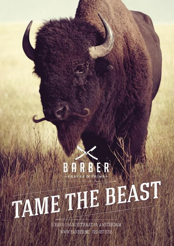 Tame the beast, Bison