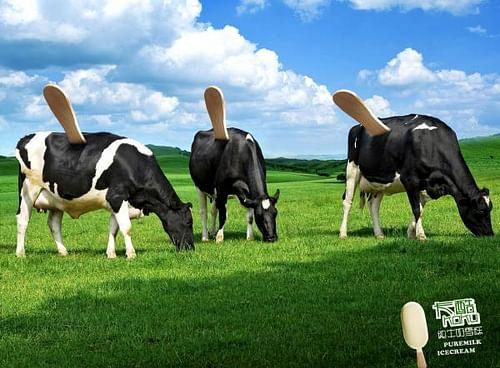 Cow - Advertising