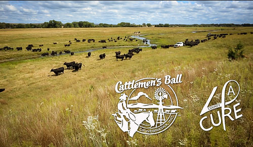 Marketing for the Cattlemen's Ball of Nebraska - Graphic Design