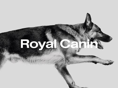Royal Canin Belgium - Website Creation