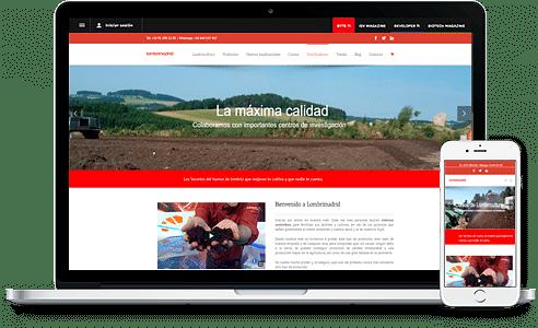 Diseño Web y posicionamiento web - Creación de Sitios Web