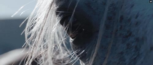 """""""Lo que he elegido"""" (REEL BAIKAL 2020) - Vídeo"""