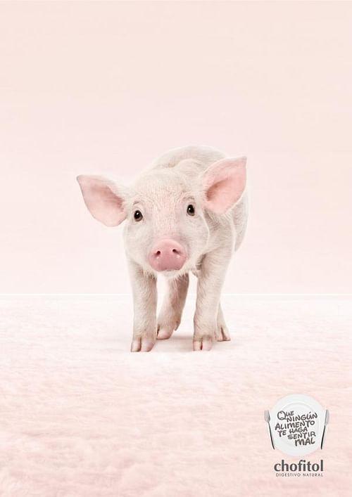 Digestivo Natural, Pig - Publicidad