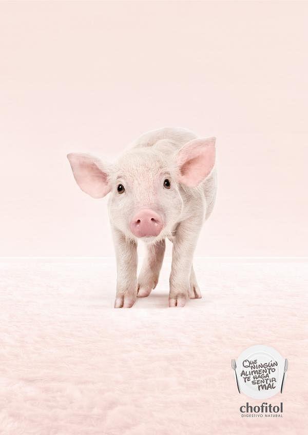 Digestivo Natural, Pig