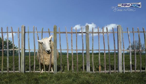 SHEEP - Advertising