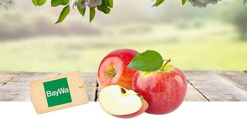 BayWa Obst | Rebranding und Kommunikation - Markenbildung & Positionierung